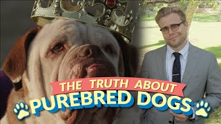 Repeat youtube video The Bizarre Truth About Purebred Dogs (and Why Mutts Are Better) - Adam Ruins Everything