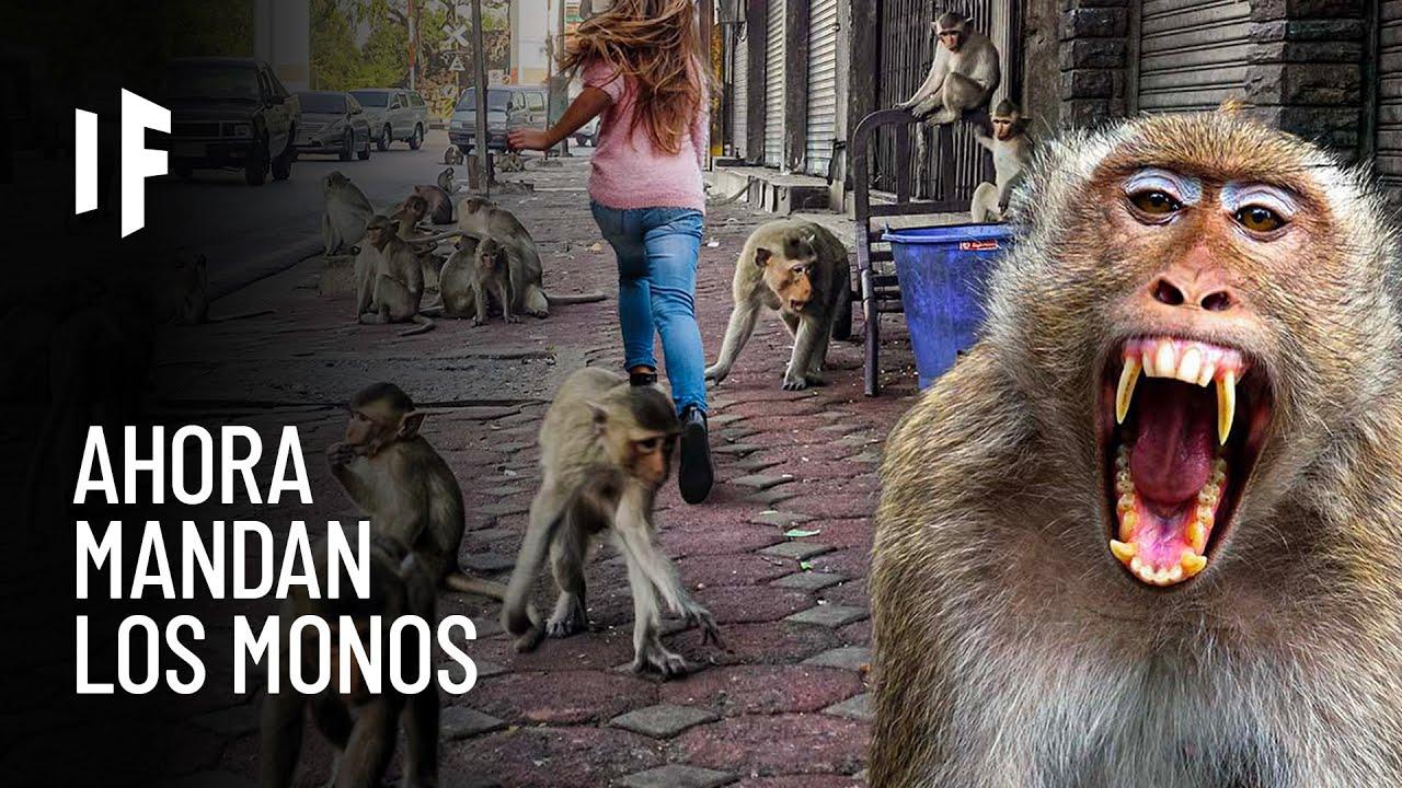 ¿Qué pasaría si los monos se apoderaran del mundo?