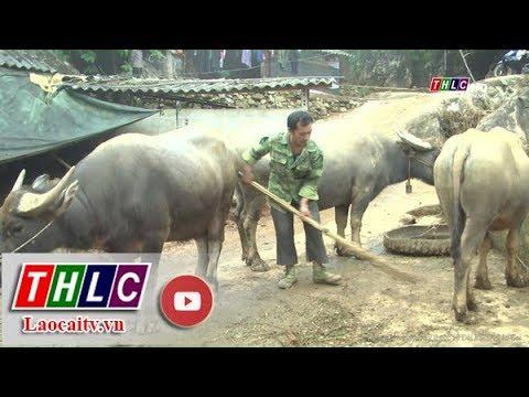 Nông nghiệp và phát triển nông thôn (11/12/2018) | THLC