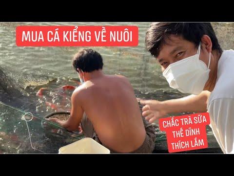 Quá trời cá kiểng vừa đẹp vừa rẻ, Khương Dừa mua mấy ký về cho Trà Sữa, Thế Dĩnh chăm sóc