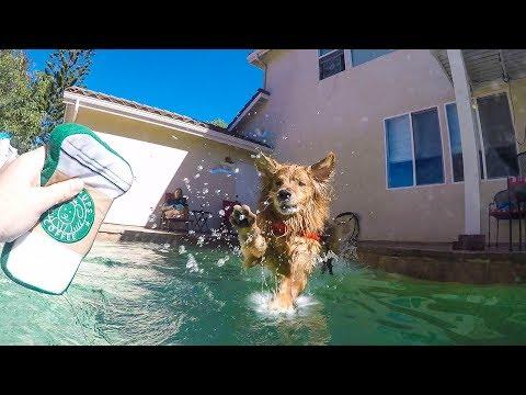 Doggos Love Swimming | Golden Retriever VLOG