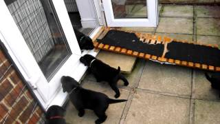Poppy's Puppies Outside For The First Time