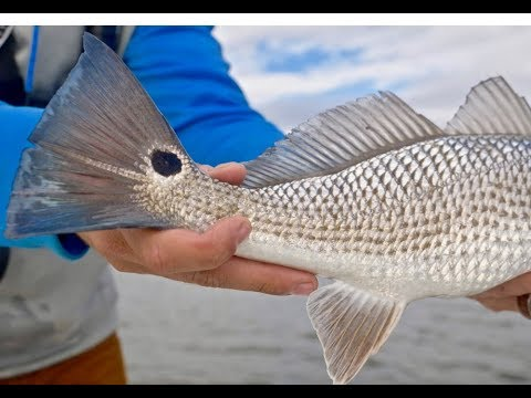 Exploring Low Country For Redfish And Speckled Trout In Beaufort South Carolina