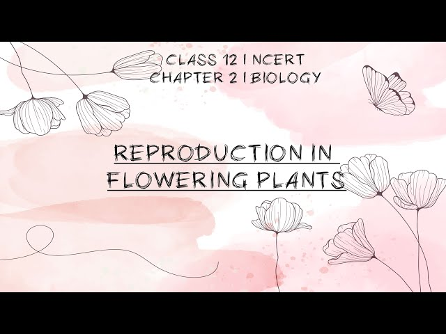 Sexual Reproduction in Flowering Plants Class 12th Biology | NCERT | NEET 2020