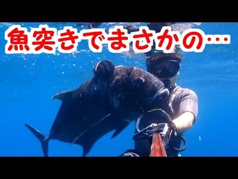 【奄美】魚突きでデカいやつきた!【大島軍】
