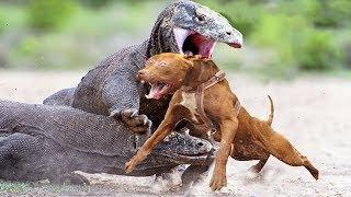 LIZARD VS DOG | Wildest Islands Of Indonesia