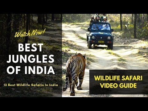 Top 13 Wildlife Sanctuaries In India - Indian Wildlife Tour For Safari Lovers