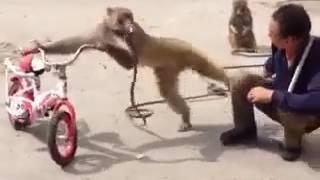 Грозная обезьяна!