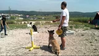 True Aggression Rehabilitation Of Greek Shepherd