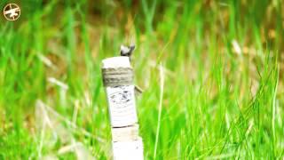 Destroy telefon - postrzelajmy z wiatrówki {By HuntingPL}