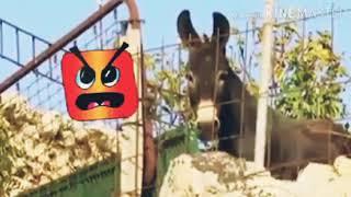 Hahaha Maryam Nawaz apny karkonu sy 😂🤣 very funny video in 2018