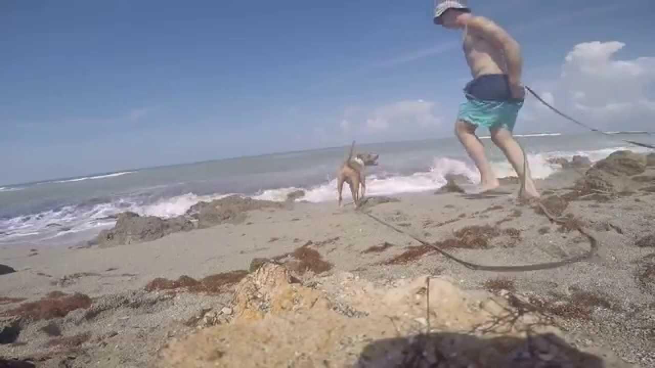 Necessary words... Nude in caspersen beach florida share