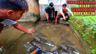 REKOR!!! Temukan Ikan Mahal Ratusan Ekor Jebolan Kolam Diterjang Banjir Bandang