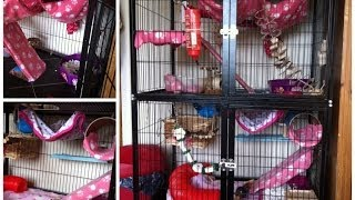 Girly Rat Cage Tour | March 2014