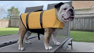 Reuben the Bulldog: 101 Roo Facts (69-101)