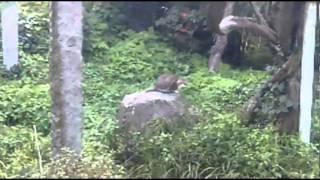 梅岳寺(ばいがくじ)は、福岡県糟屋郡新宮町立花にある曹洞宗の寺で、...