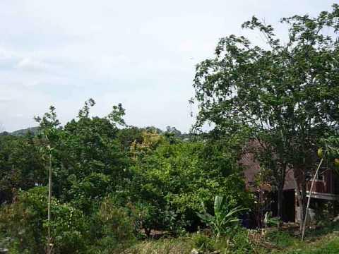 ขายที่ดินเขาใหญ่ เทศบาลต.หมูสี บ้านท่าช้าง ที่โฉนด1ไร่2งานเศษขาย7.5ล้าน