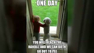 20 + Funniest meme | Daily laughter