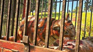 Red Dead Redemption 2 - Tiger Eats Dog & Capturing Tiger (Margaret Mission #2)