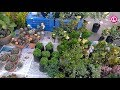 Cactus Tree & Garden Lover – Best Place to Purchase Plant | Our Lifestyle