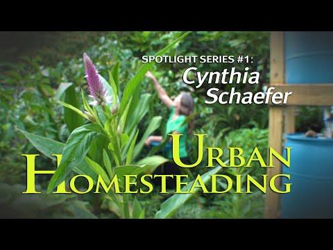 urban-homesteading-(spotlight-series#1:-cynthia-schaefer)