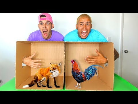 What's In The BOX Challenge!!! (LIVE ANIMALS)