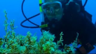 Jamaica Reef Rescue