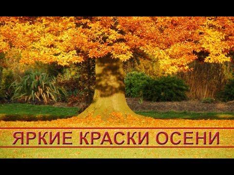 Яркие краски осени: красивая осенняя природа. Bright colors of autumn: beautiful autumn nature