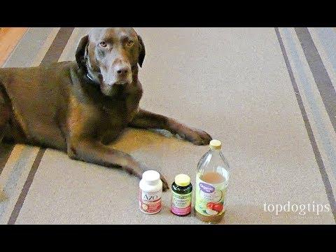 how-to-make-dog-uti-home-remedy-(budget-friendly)