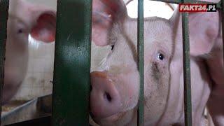 Te zwierzęta ratują ludzkie zdrowie