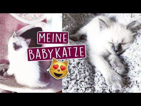 MEINE NEUE BABYKATZE 😻 - NAME, Eingewöhnung und mehr!