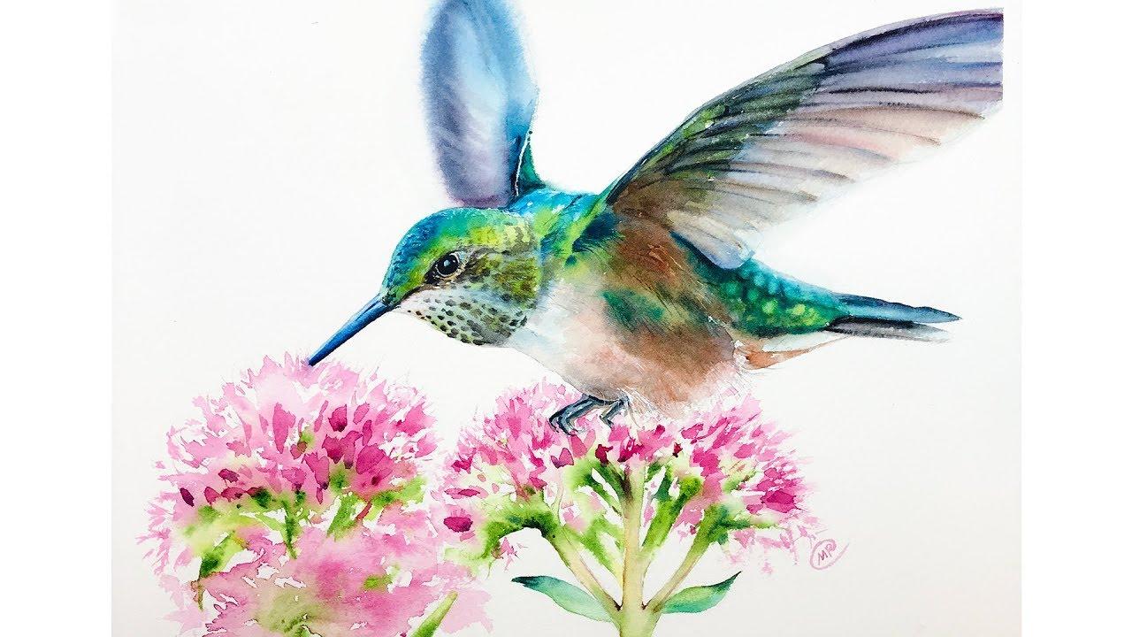 Watercolor Hummingbird Painting Process - YouTube