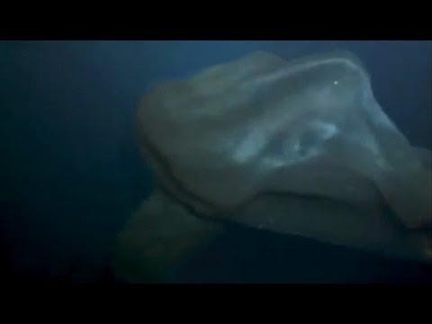 DEEP SEA BLOB CREATURE