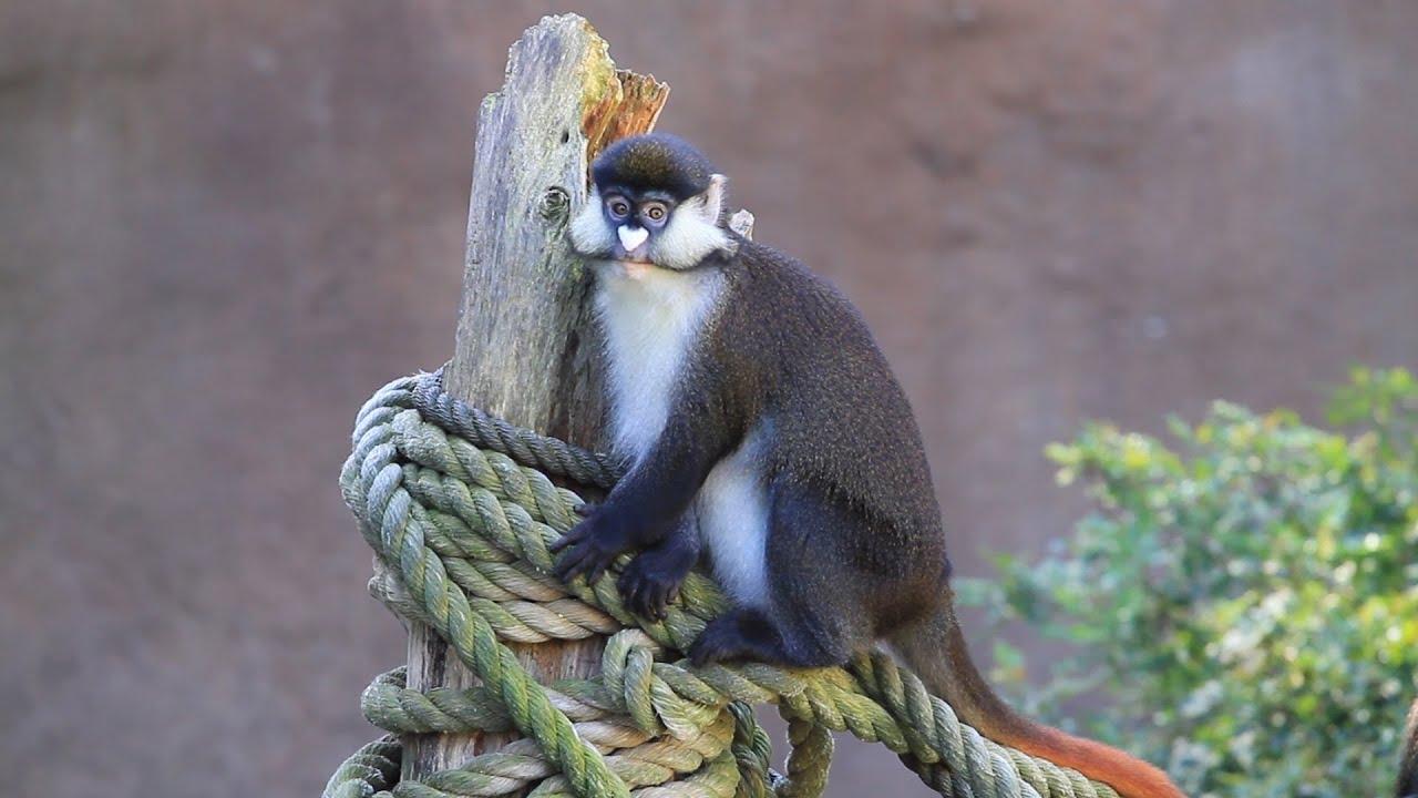 Primate Observation – San Diego Zoo Essay Sample