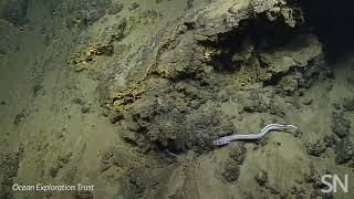 Marine microbes emerged in the wake of Kilauea's eruption | Science News
