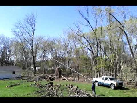 Tree Falls Wrong Way