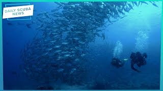 Daily Scuba News - Scuba Diving Standards Questioned At Sipadan
