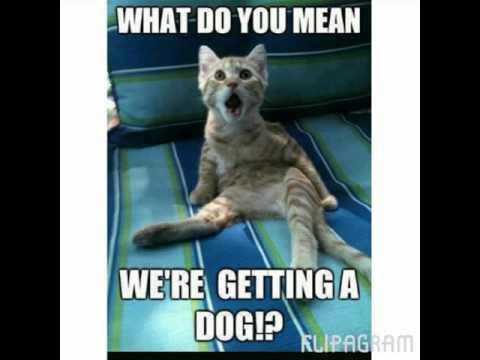 Funny Meme Hi : Funny dog pics memes the best dog