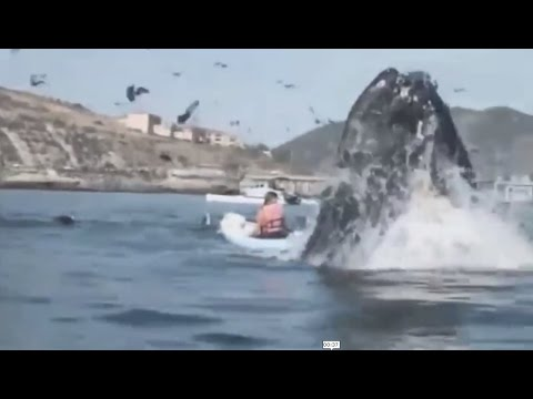 Huge Whale Almost Eats Kayakers