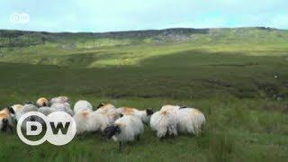 Nordirlands Farmer fürchten den Brexit   DW Deutsch