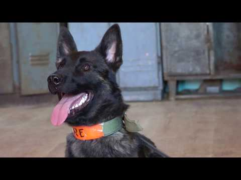 Ture Dutch Shepherd   Detection Inside And Outside