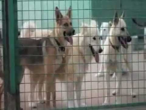 Moscow dog shelter