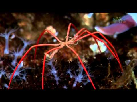 Under the Antarctic Ice Beauty of The Nature 720p HD