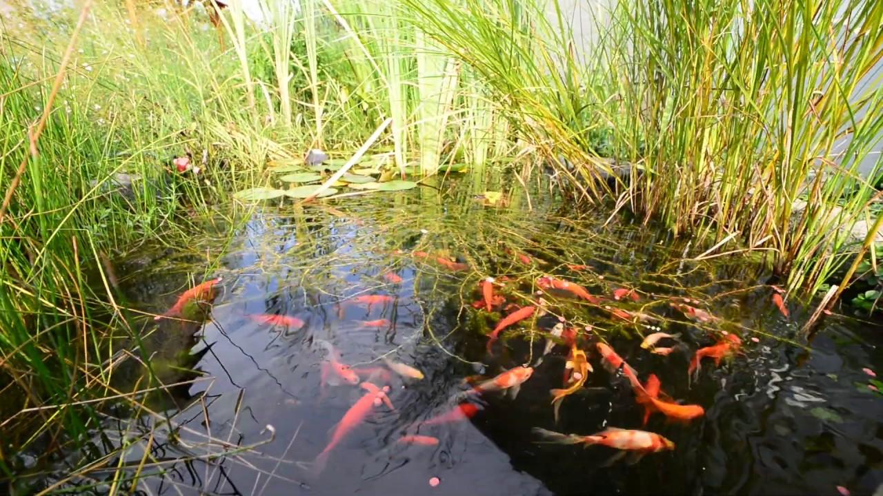 vörös színű halparaziták