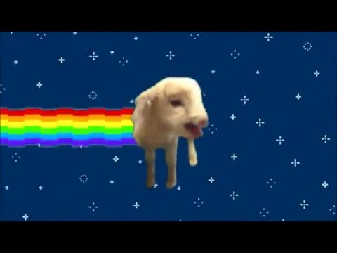 ♪ Top 5 : Nyan Animals   Remix Music ♪