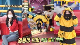 양봉장 현떠 직접 벌로 변신!! #디스코팡팡 #koreanculture #933
