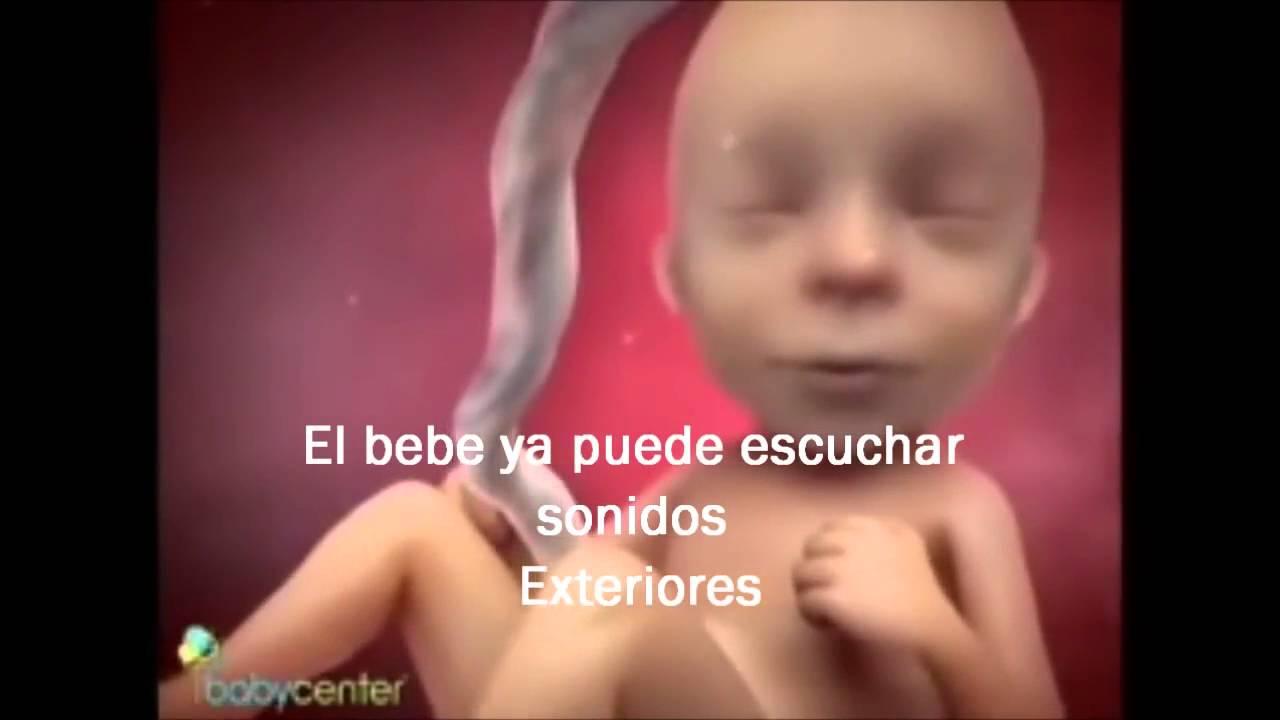 992f81566 FECUNDACION EMBARAZO Y PARTO - YouTube