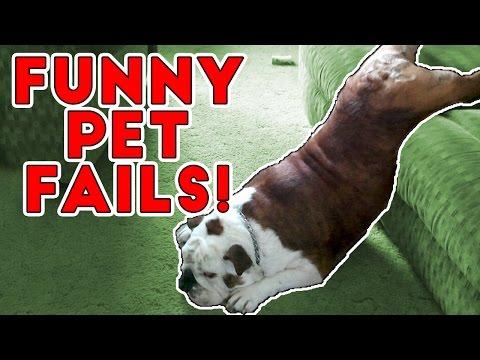 Hilarious Pet Fails 2017   Funny Pet Videos