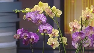Orchids: The Different Types & Tips On Taking Care Of Them