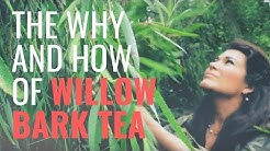 hqdefault - Willow Bark For Back Pain